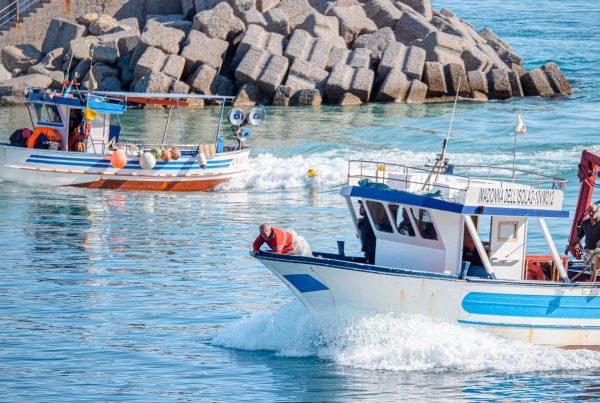 Pesca Tropea
